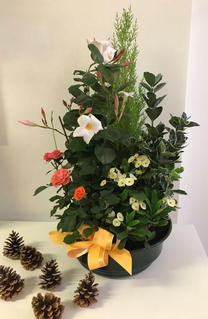 coupe-de-plantes1